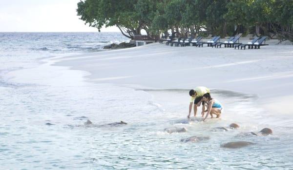 Luxurious Vivanta by Taj Coral Reef, Maldives (2)
